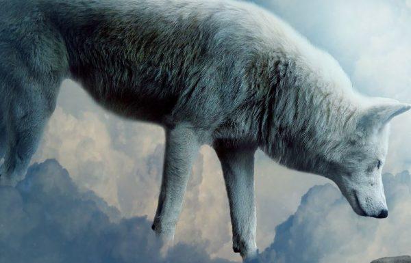 מסחר בשוק ההון – הזאב מרעננה (קבל וובינר חינם)